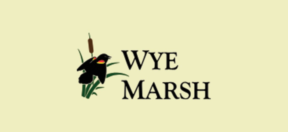 Starry nights, owl calls highlight Wye Marsh's night hikes